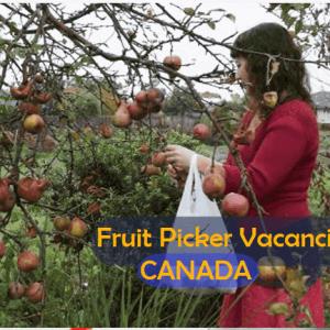 Fruit Picker Needed At Thwaites Farms Ltd in Langton, Ontario